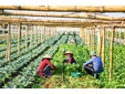 Promoting sustainable agricultural production by 4 0 technology - Success story of a scientific entrepreneur