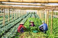 Thúc đẩy sản xuất nông nghiệp bền vững bằng công nghệ 4 0 - Câu chuyện thành công của một doanh nhân khoa học